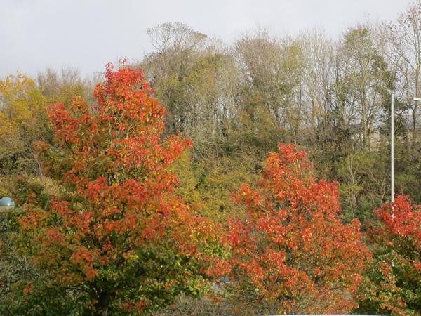 November: Haverfordwest